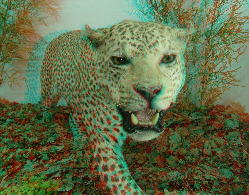 http://4.bp.blogspot.com/-DxeLw_7MwXk/UPVjq2oc0GI/AAAAAAAAFv0/ySGUrATKNpI/s1600/3d+tiger+hd+wallpaper.jpg