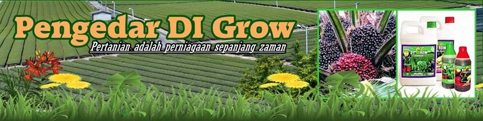 Pengedar DI Grow