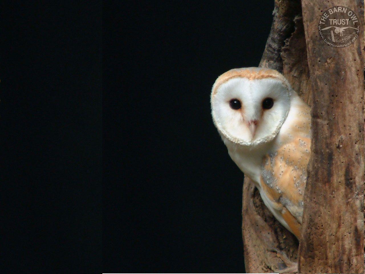 Owl | Birds Guide