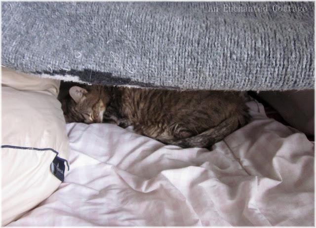 Cat Sleeping On Back Feels Safe
