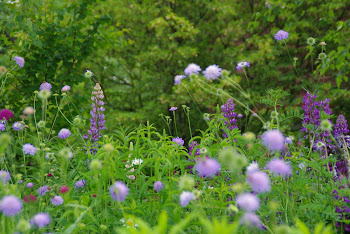森のcradleの庭を。