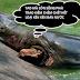 Suy nghĩ về cái chết của cụ rùa Hồ Gươm