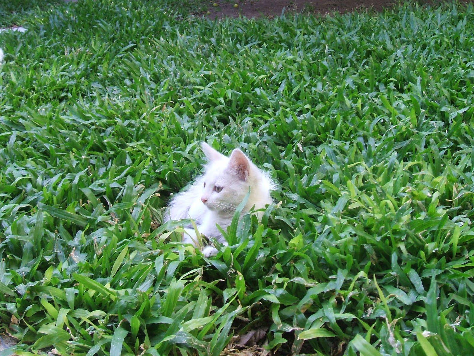 Un viejo gato azul plantas venenosas para el gato for Ahuyentar gatos del jardin