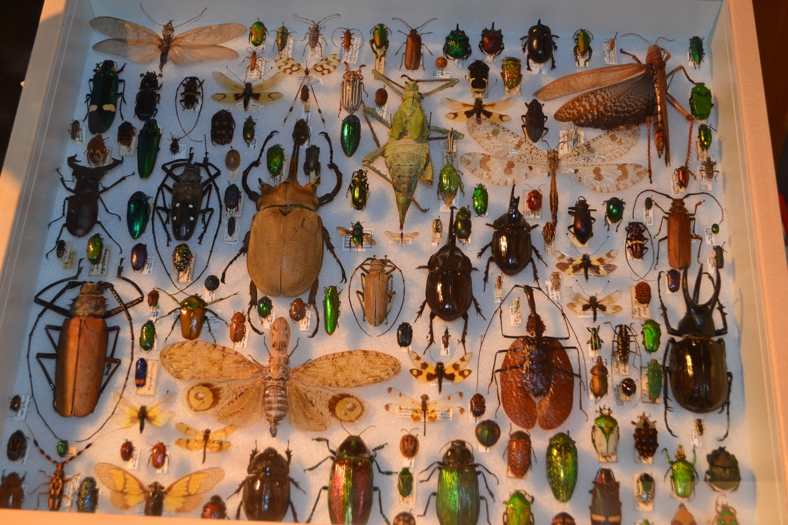 The Museum Houses Thousands Of Pinned Arthropods In Addition To The Live  Butterflies.