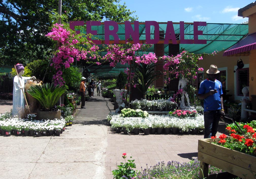 Cool Summery Weather   Ideal For Gardening. Our Closest Garden Centre Is  Ferndale Nursery In Brommersvlei Road, Constantia   A Really Good Garden  Centre ...