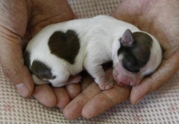 Các em cún đáng yêu chào đón thế giới mới ảnh 14
