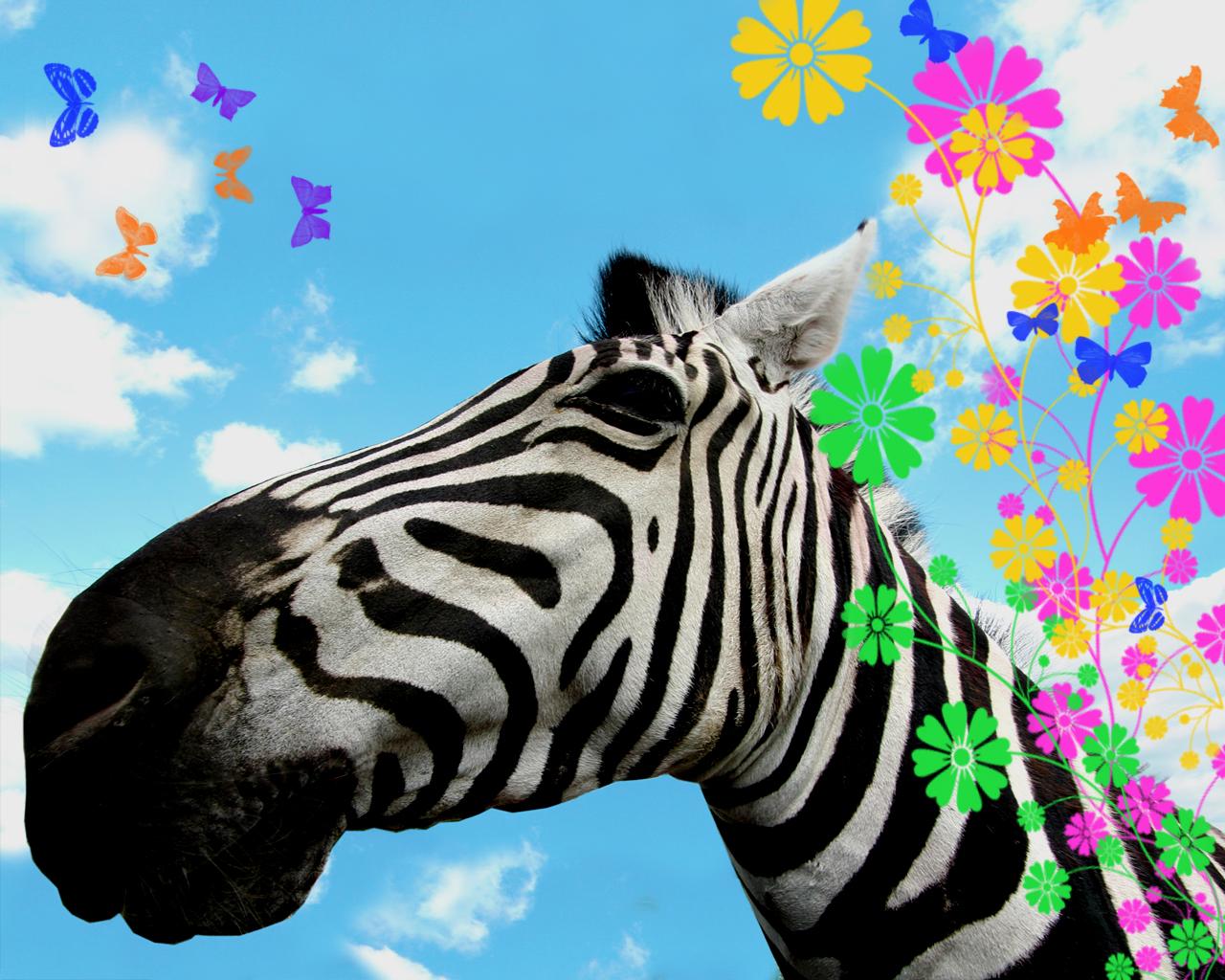 http://4.bp.blogspot.com/-E-ER1f9NTuY/Tmv2Zvz9SHI/AAAAAAAAGTw/SbUNkgnzISw/s1600/Zebra%2Bpicture%2Bfor%2Bdesktop1.jpg