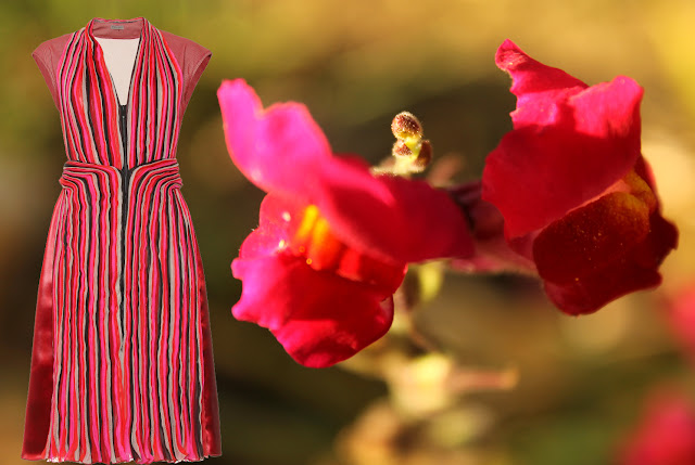 Dark red and pink Bottega Veneta dress and a snapdragon
