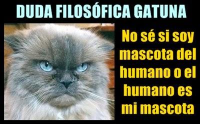 meme-gato-filosofo