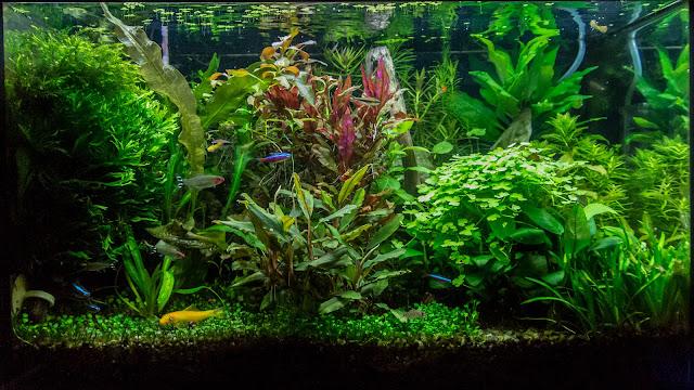 фото аквариума на 28 января 2016
