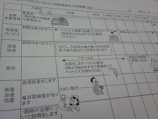 写真:ステロイドパルス入院計画表