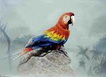 Galería Aves al Óleo