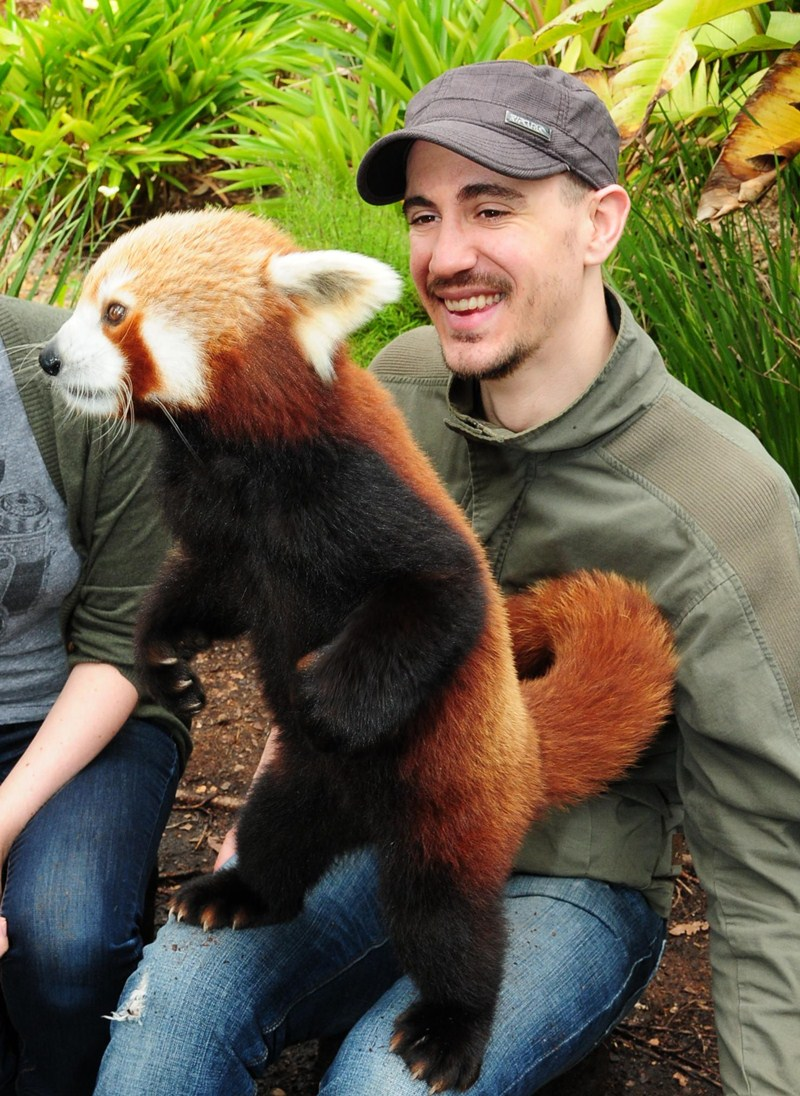 funny animal pictures, cute red panda
