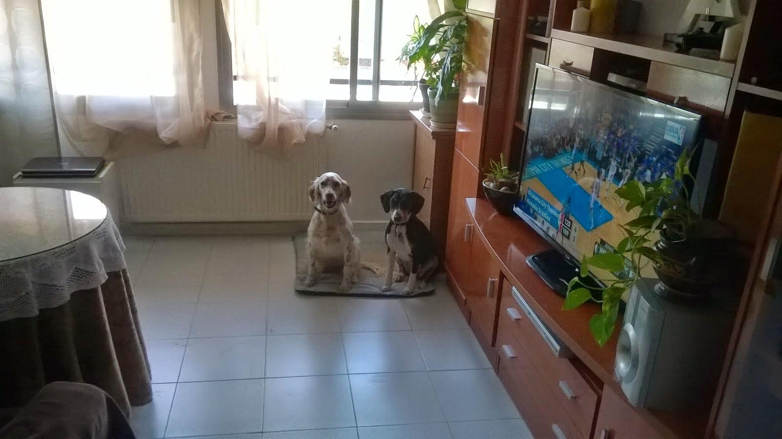 Tu mascota como en su casa estaran