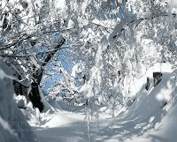 iarna zapada