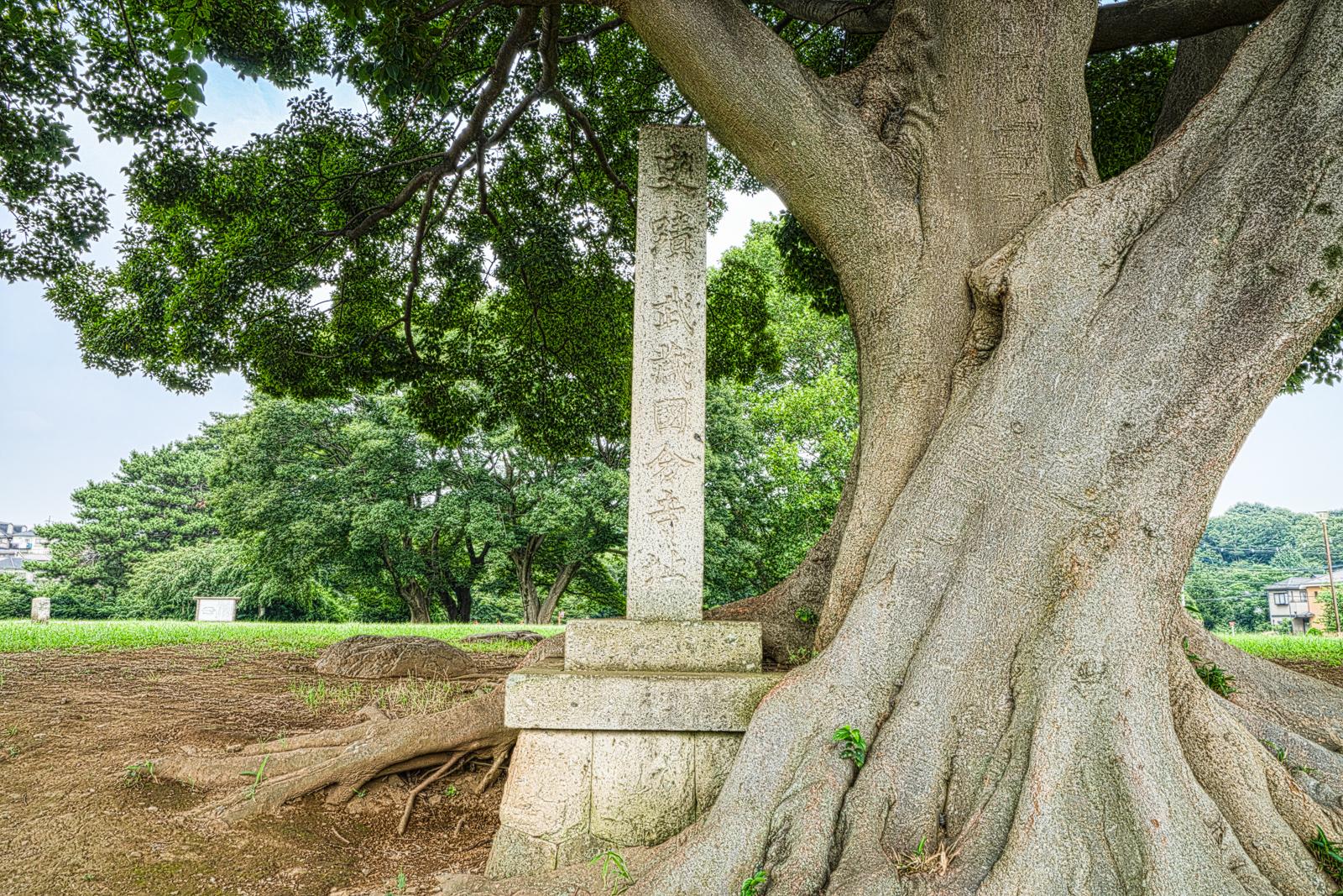 金堂跡前に建つ武蔵国分寺跡石碑の写真