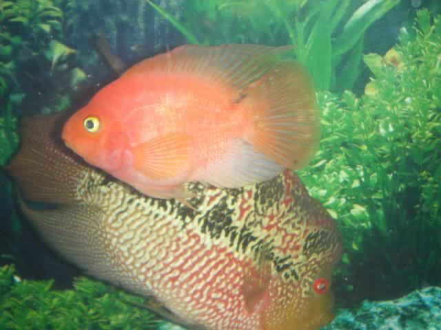 Cool pictures top 30 cool funny fish wallpaper gallery for Funny fish pictures