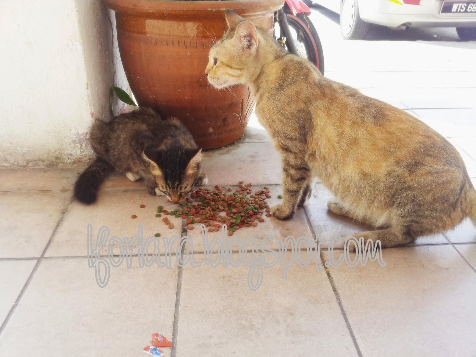 Aku Kucing Dia Dan Kamu