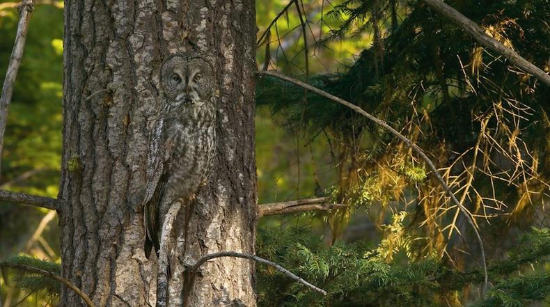 Animales que se mimetizan con su entorno ¿Podrás encontralos?