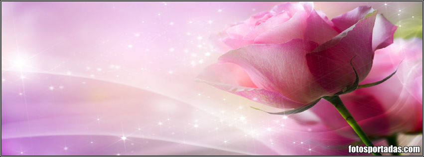Imagenes de rosa rojas con frase de amor Imágenes