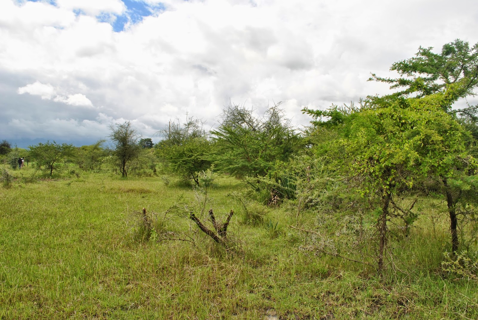 Rent house in tanzania arusha rent houses houses for sale land plots for sale matevesi and - Houses for small plots of land ...