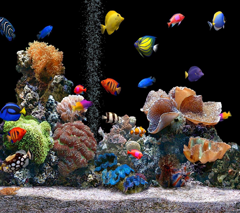 3d Aquarium Live Wallpaper: HD Wallpapers: June 2012