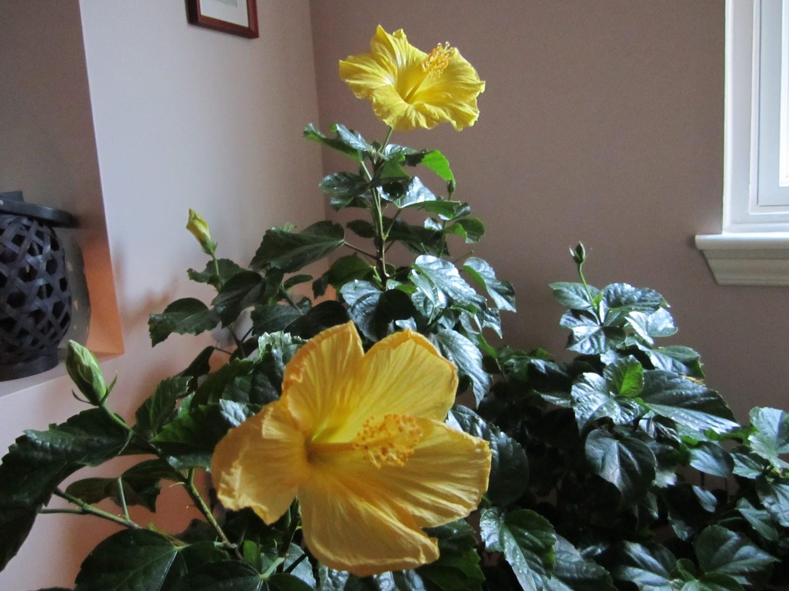PARKIC: Cvijece i muskarci