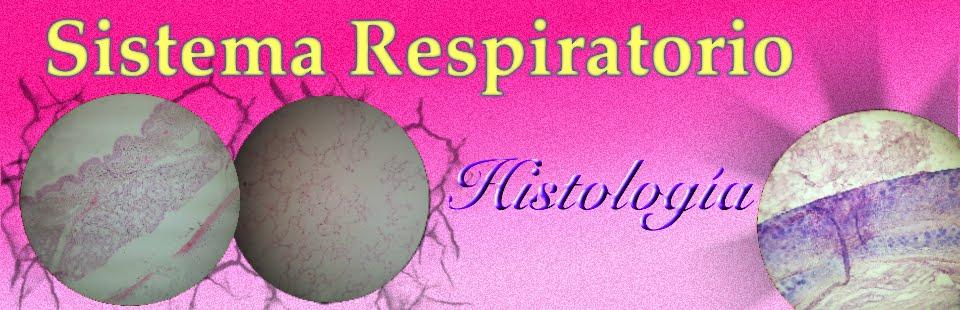 Histología: Sistema Respiratorio