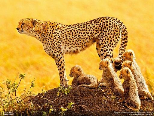 مجموعة من أجمل صور و خلفيات ناشونال جيوجرافيك National Geographic Wallpapers 2012