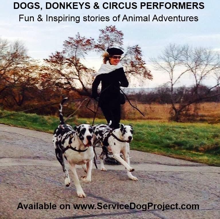 Visit SDP Doggie Bag