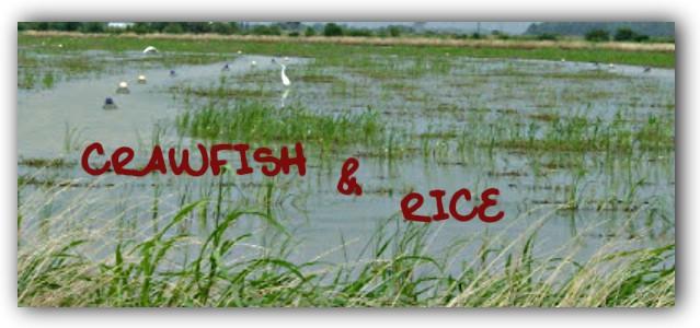Crawfish & Rice: Cajun and Creole