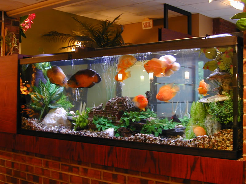 Aquarium guide for Aquarium eau douce pas cher