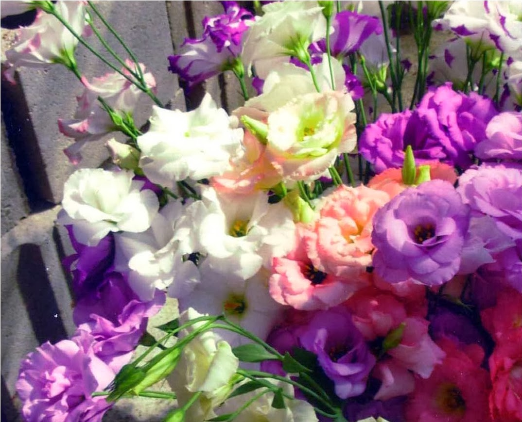 Romantic Flowers Lisianthus Flower