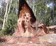 Osun-Osogbo Sacred Grove Nigeria
