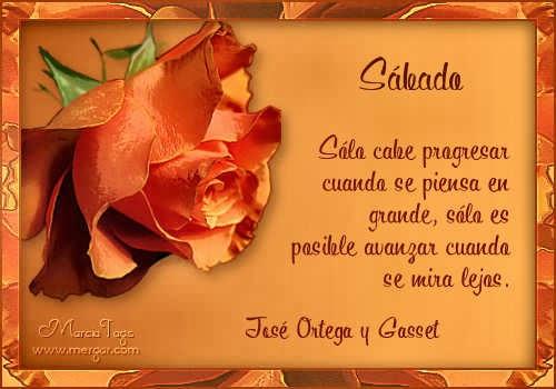 mgc-flores11_06-Sabado_Tube-DW.jpg