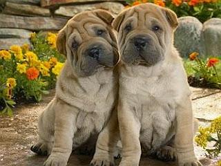 Cachorros, parte 2