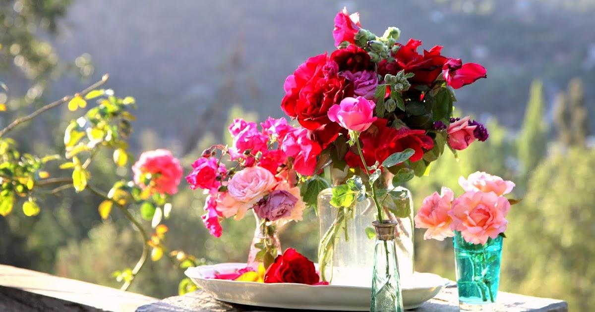 Casa dulce hogar arreglitos con flores de mi jard n for Ahuyentar gatos de mi jardin