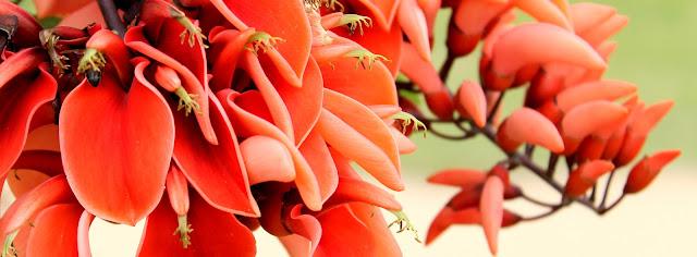 Imagem de flores vermelhas com rosa