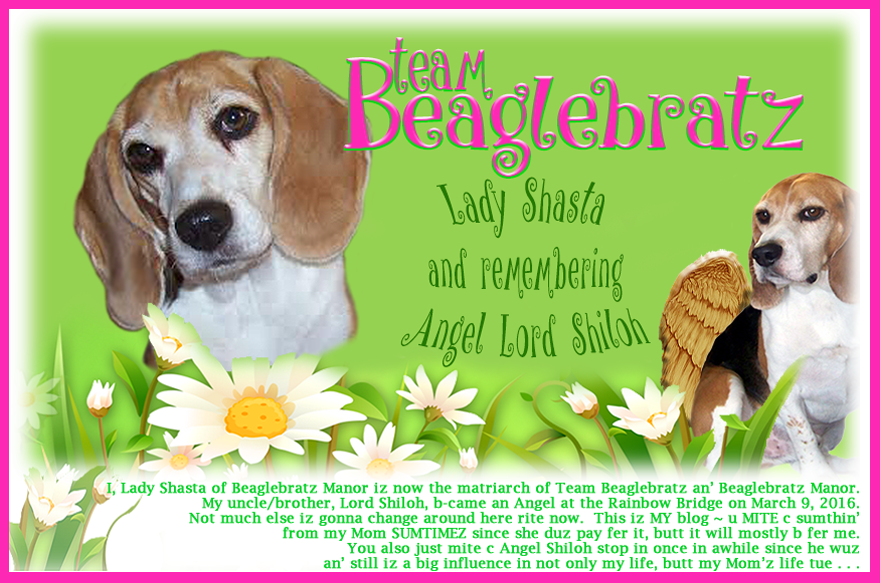 TEAM BEAGLEBRATZ with Lady Shasta