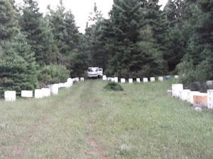 Το μελισσοκομείο στον έλατο