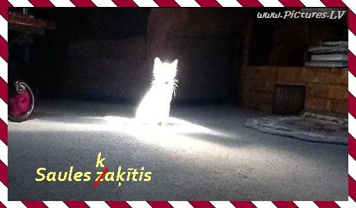 Kaķis saules apgaismots