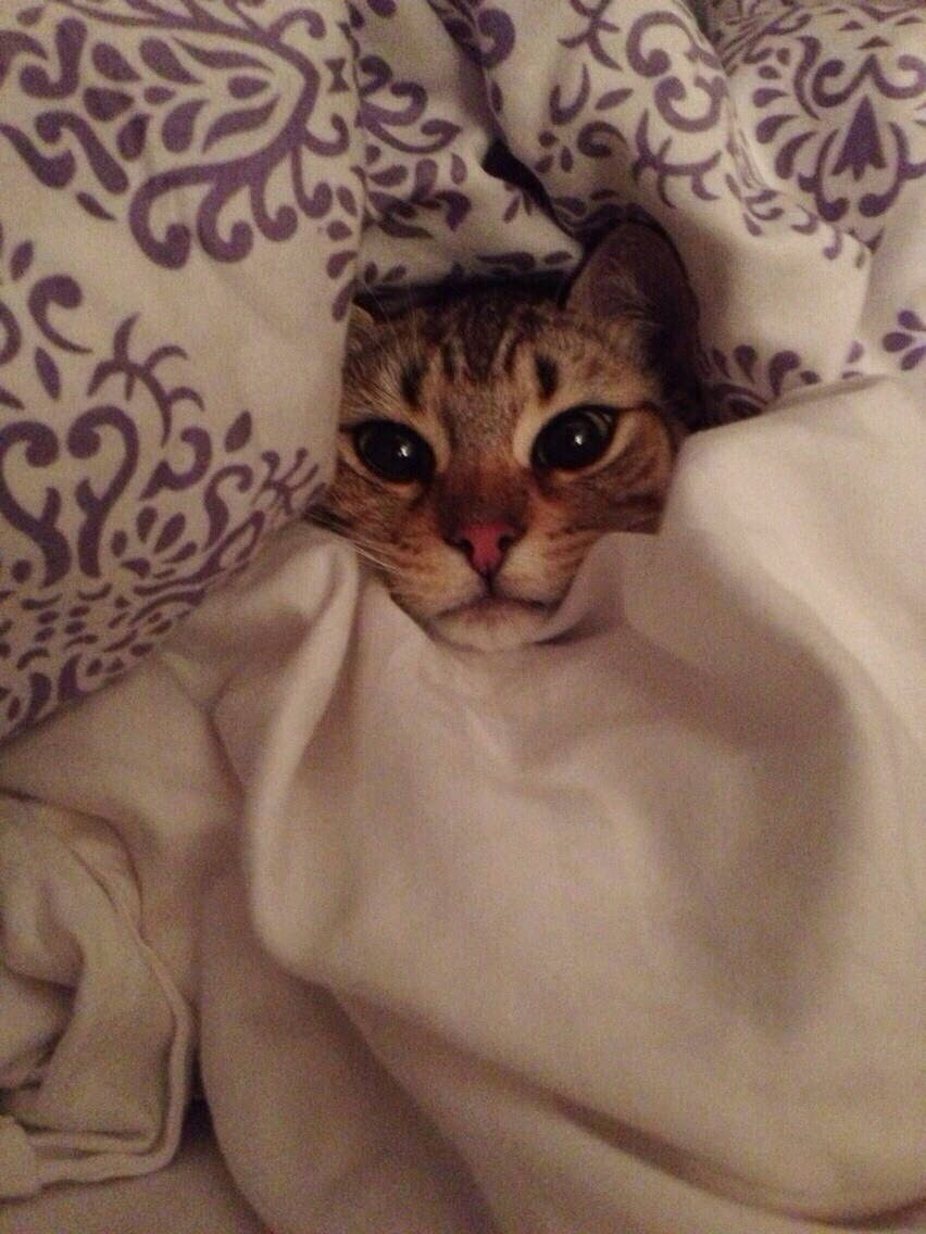 Funny cats - part 94 (40 pics + 10 gifs), cat pictures, cat under the blanket