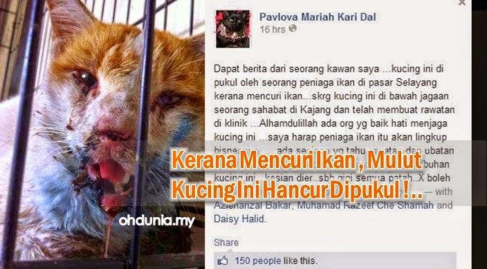 Penjual Ikan Kejam Pukul Mulut Kucing Sampai Pecah Kerana Curi Ikan