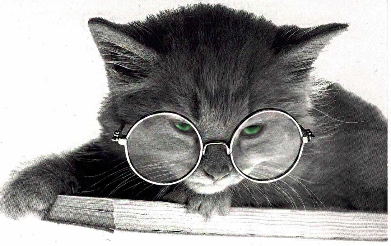 Understanding Your Cat S Behavior