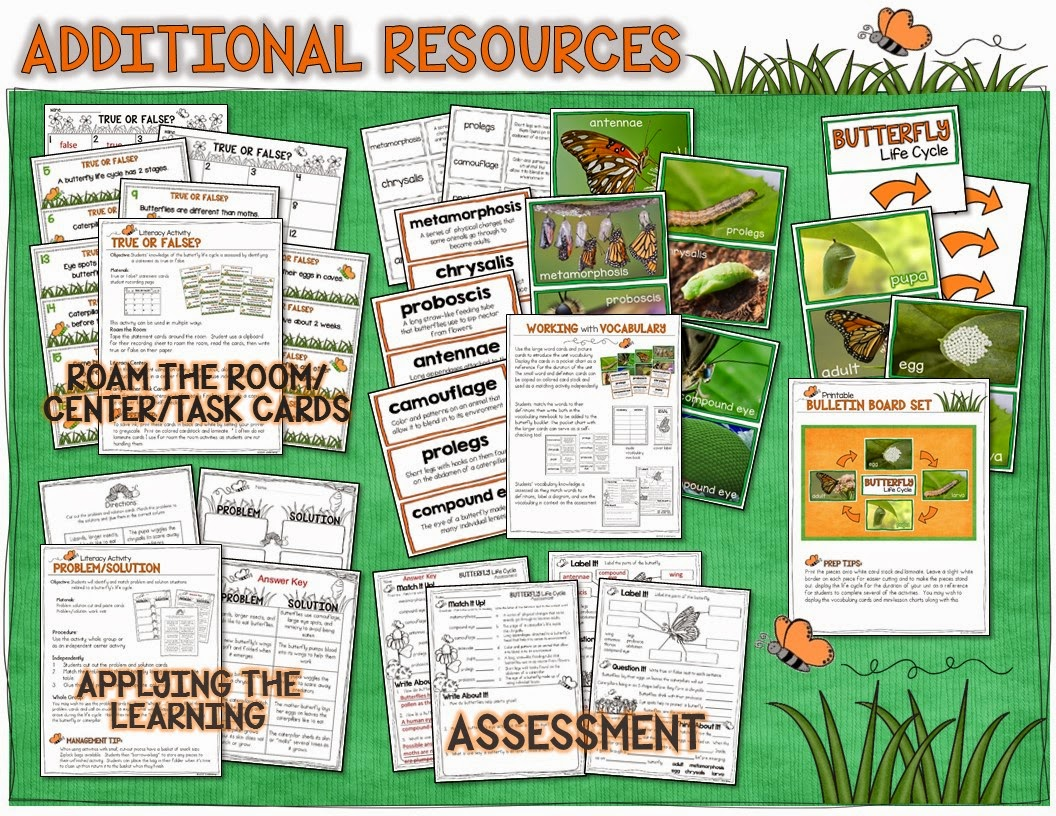 Butterfly life cycle lessons and activities