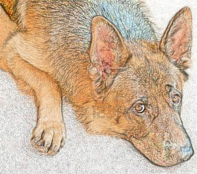 German shepherd dog art work