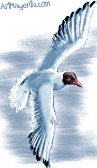 Black-headed Gull sketch painting. Bird art drawing by illustrator Artmagenta