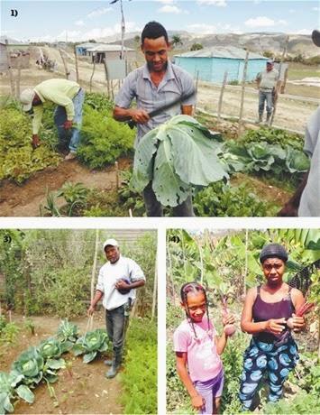 Los huertos familiares impactan San Juan