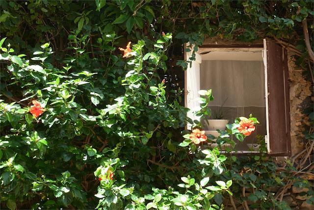 Bellas fachadas con cubierta vegetal