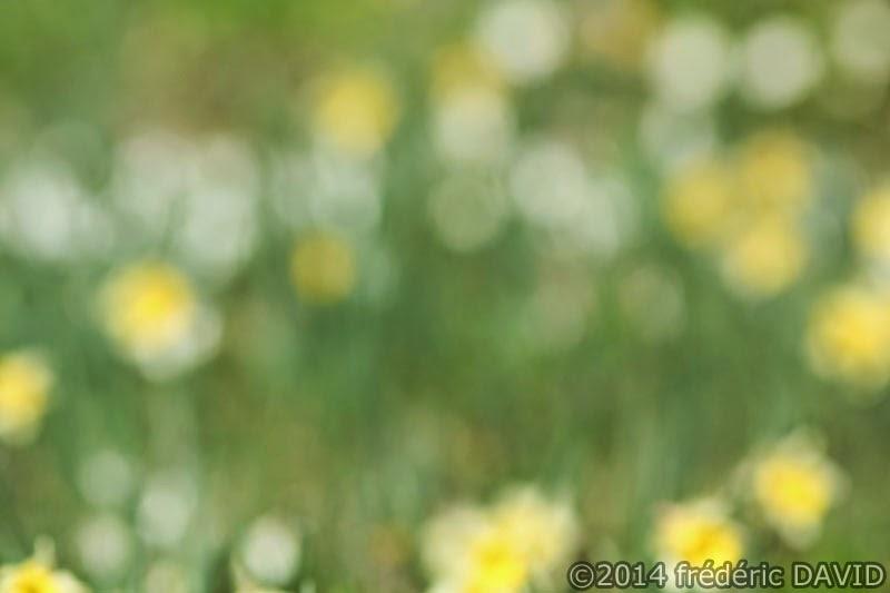 forêt nature fleurs printemps Rougeau Seine-et-Marne